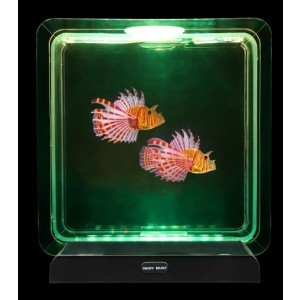 Fish Tank Square – 2 Tropical Fish